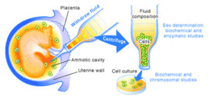 preimplantation